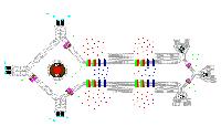 cellular_Model